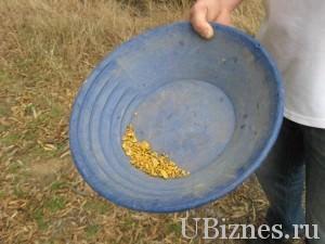 Просеивание воды для поиска золота в Австралии