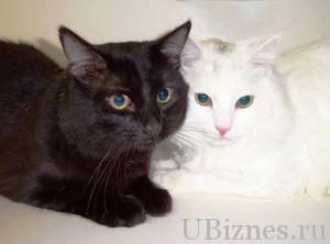 Гипоаллергенная кошка Аллерка – 7000 долларов – 4 место