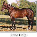 Pine Chip: 0 млн. $