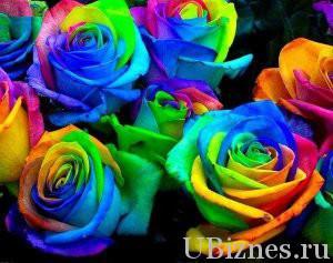 Радужная роза Питера Ван де Веркена - 10-15 долларов