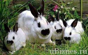 Кроличья семья - кролик и три крольчонка, черно белый окрас, порода Бабочка