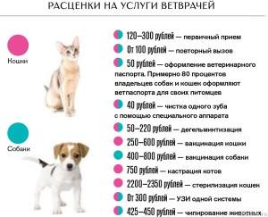 Расценки врачей для животных