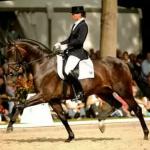 Самая дорогая лошадь в мире: сколько стоит самая дорогая лошадь в мире